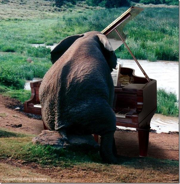 77629313_large_3738598_elephant_piano